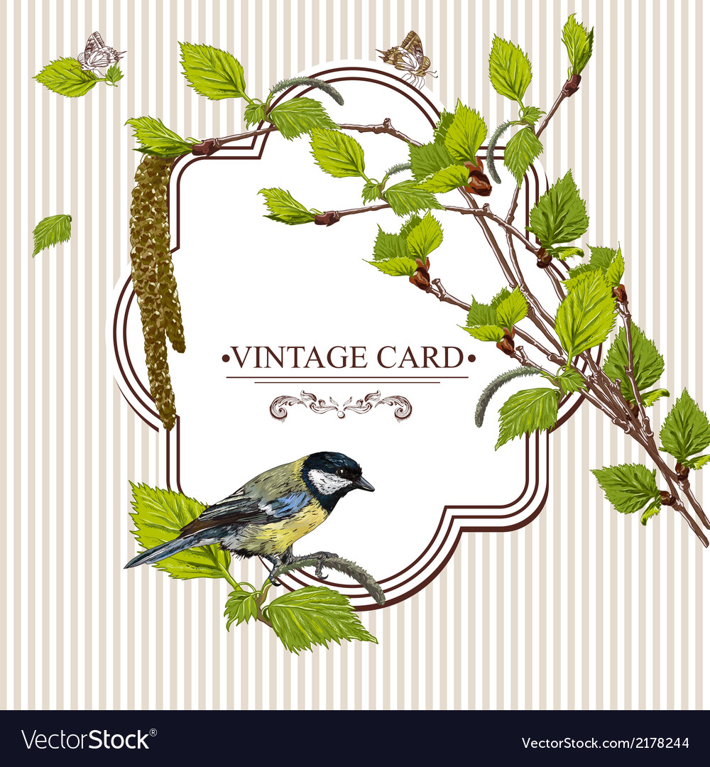 Vintage background with birch branches and tit vector | Price: 1 Credit (USD $1)