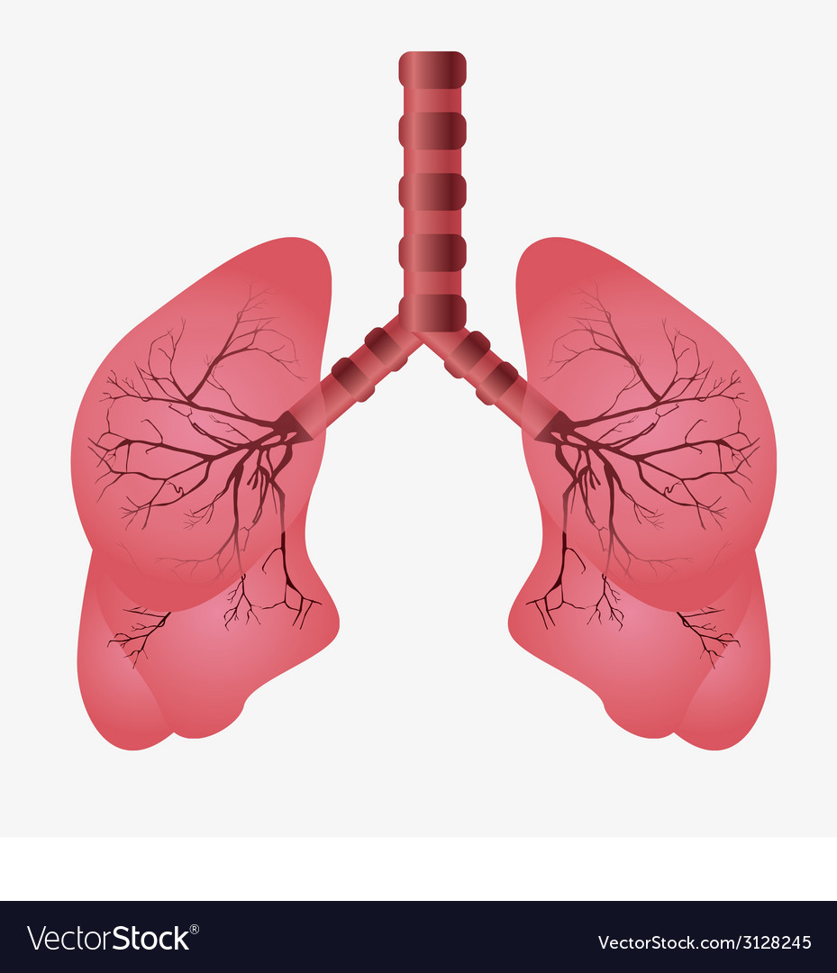 Lungs design vector | Price: 1 Credit (USD $1)