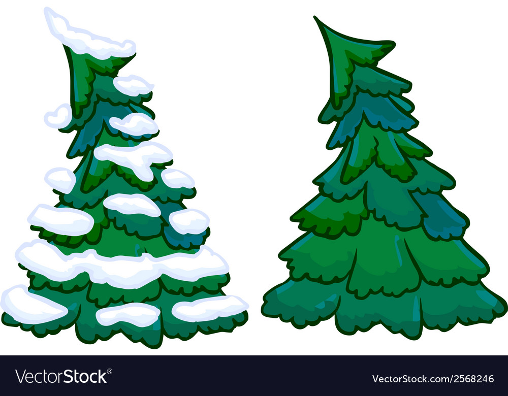 Conifer tree isolated vector | Price: 1 Credit (USD $1)