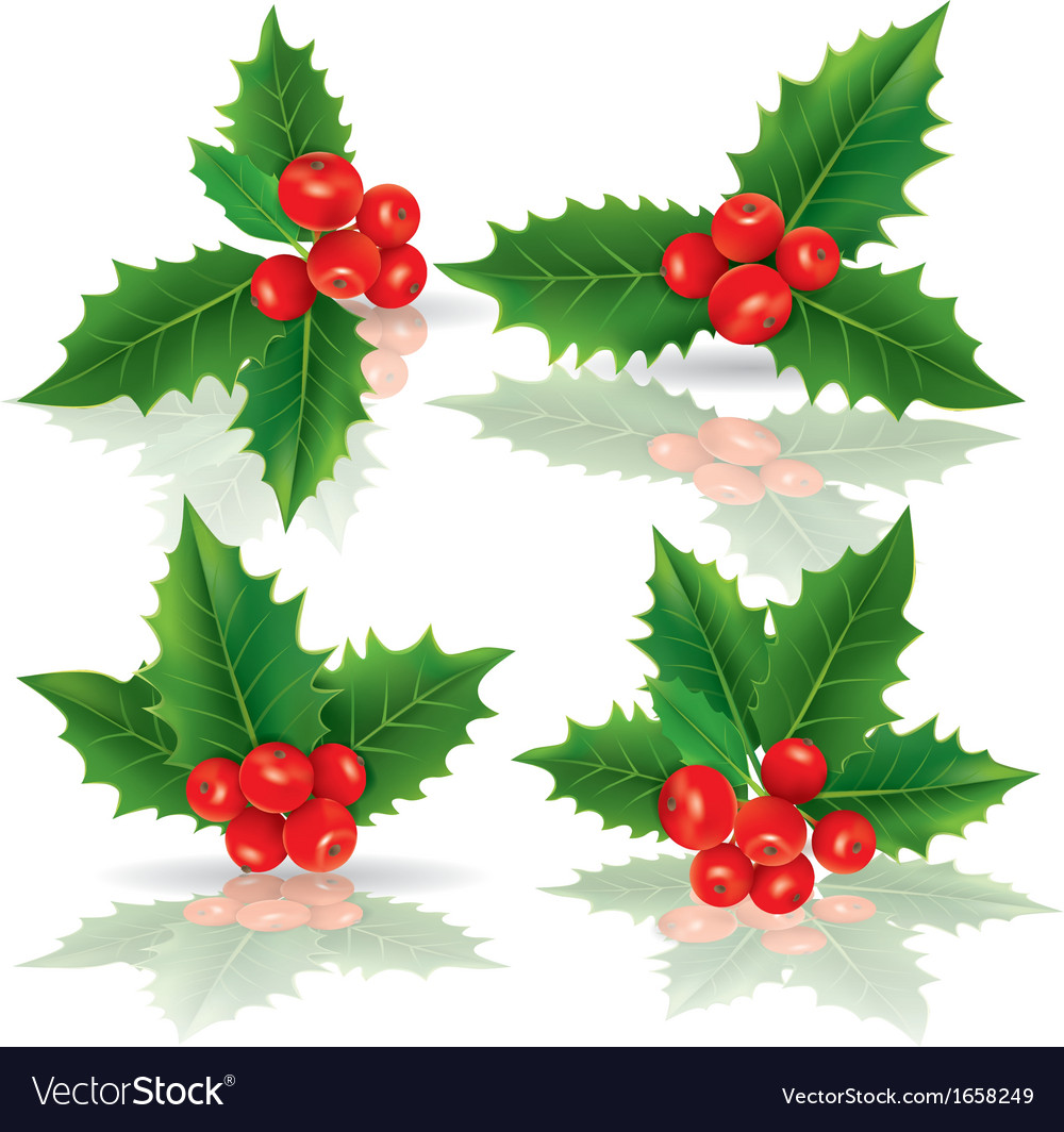 Holly berries vector | Price: 1 Credit (USD $1)