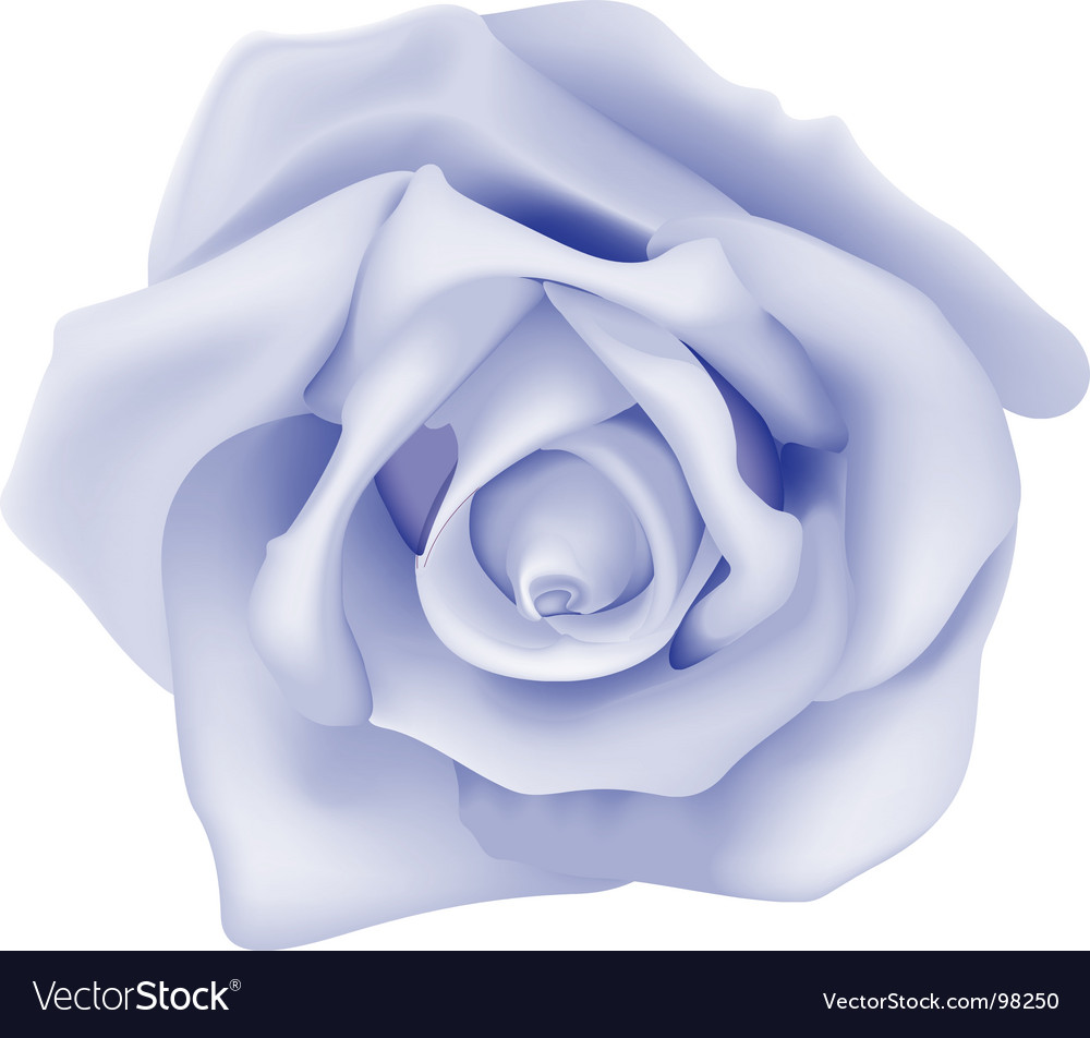 Blue rose vector | Price: 1 Credit (USD $1)