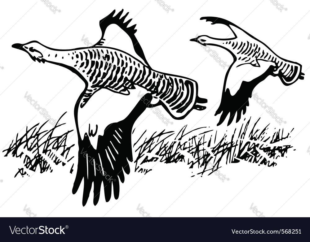 Great bustard bird vector | Price: 1 Credit (USD $1)