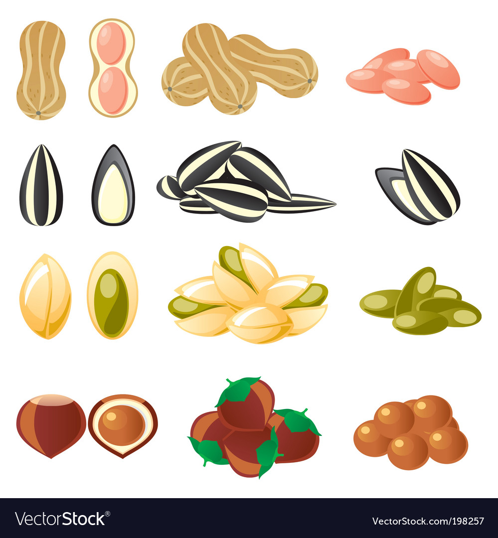 Nuts set vector | Price: 3 Credit (USD $3)