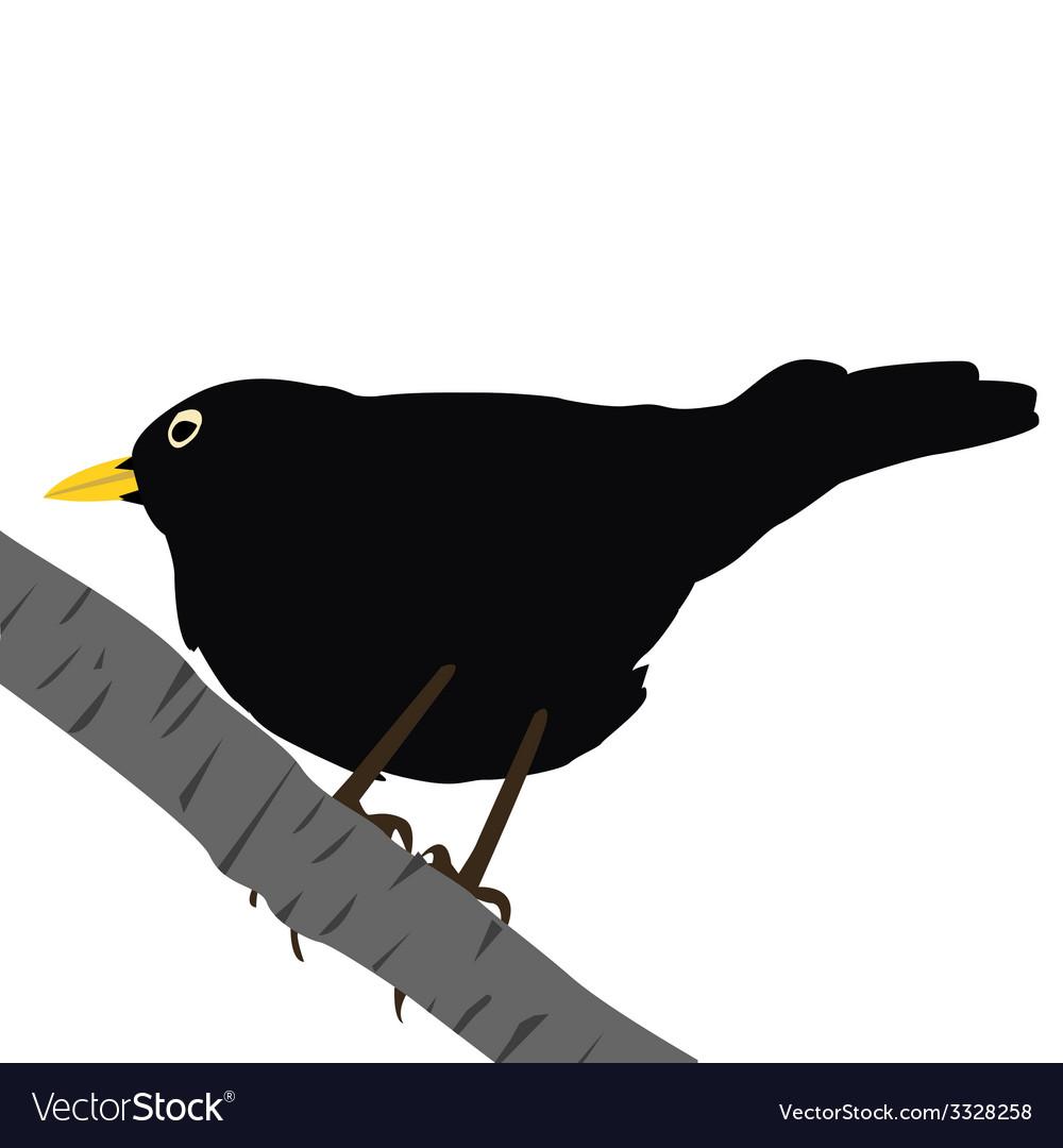Blackbird on a branch vector