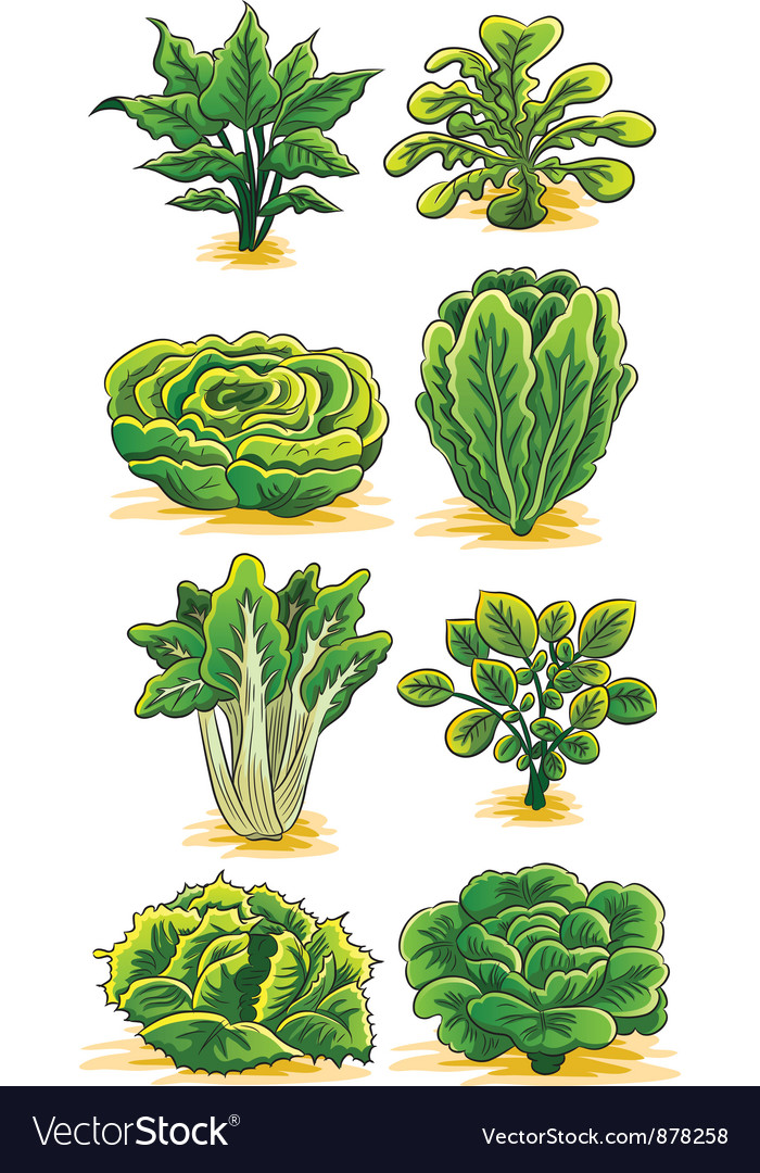 Green vegetables collection vector | Price: 3 Credit (USD $3)