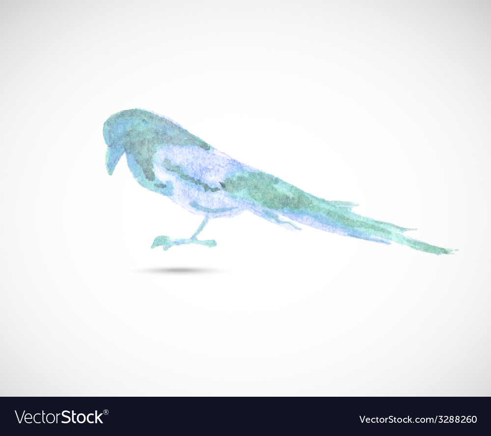 Watercolor magpie vector | Price: 1 Credit (USD $1)