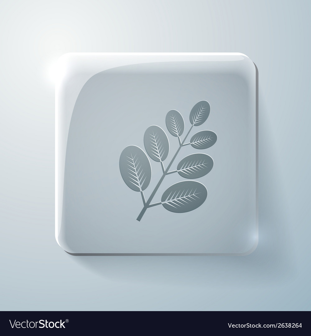 Branch with leaves glass square icon vector | Price: 1 Credit (USD $1)