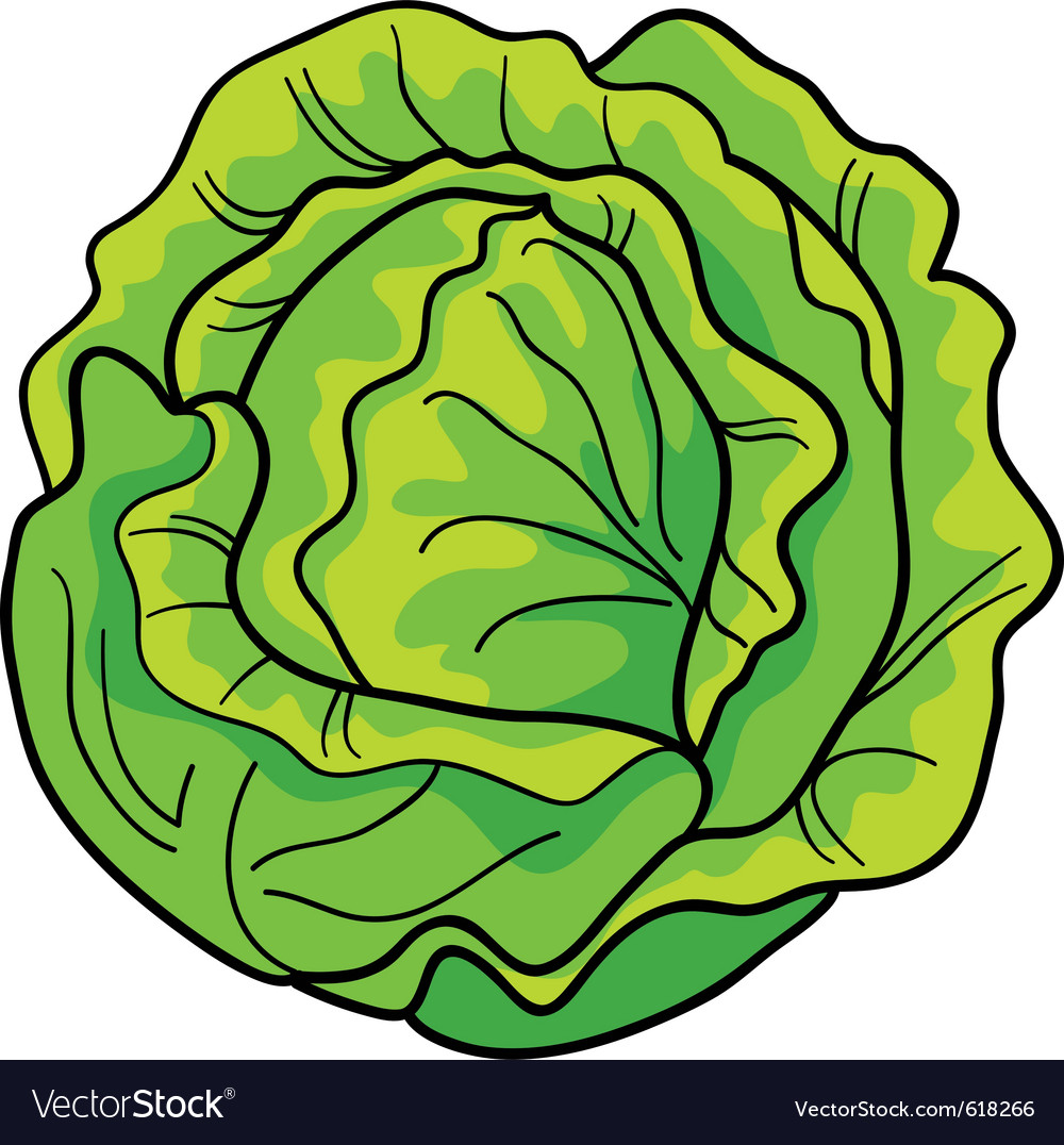 Cartoon of green cabbage vector | Price: 1 Credit (USD $1)