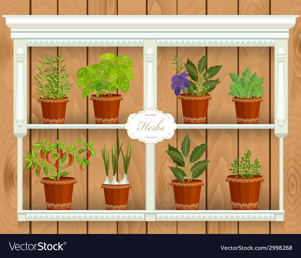 Shelfs with collection of herbs in a flowerpots at vector | Price: 1 Credit (USD $1)