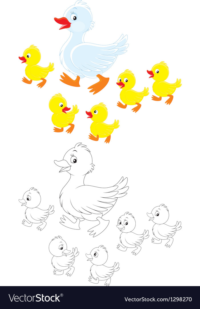 Duck and ducklings vector | Price: 1 Credit (USD $1)