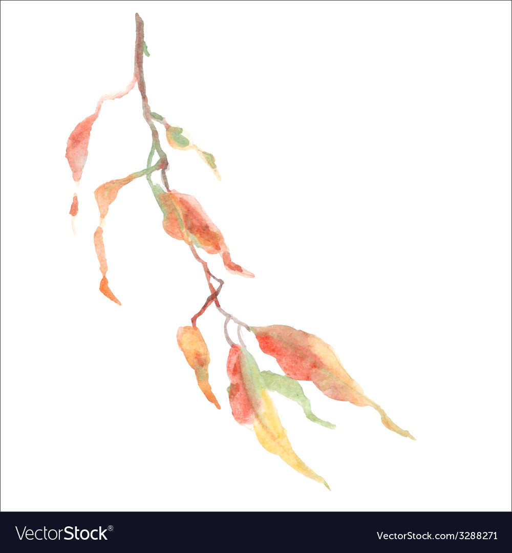 Green leaves on branch vector | Price: 1 Credit (USD $1)