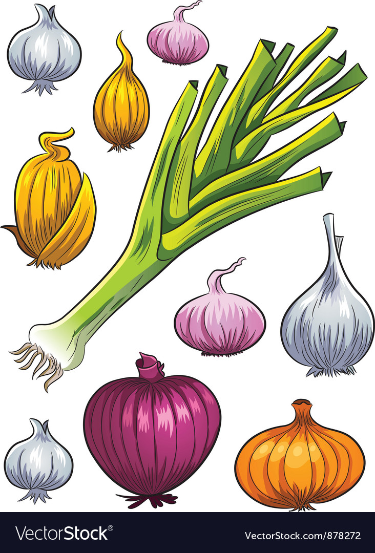 Onion collection vector | Price: 3 Credit (USD $3)