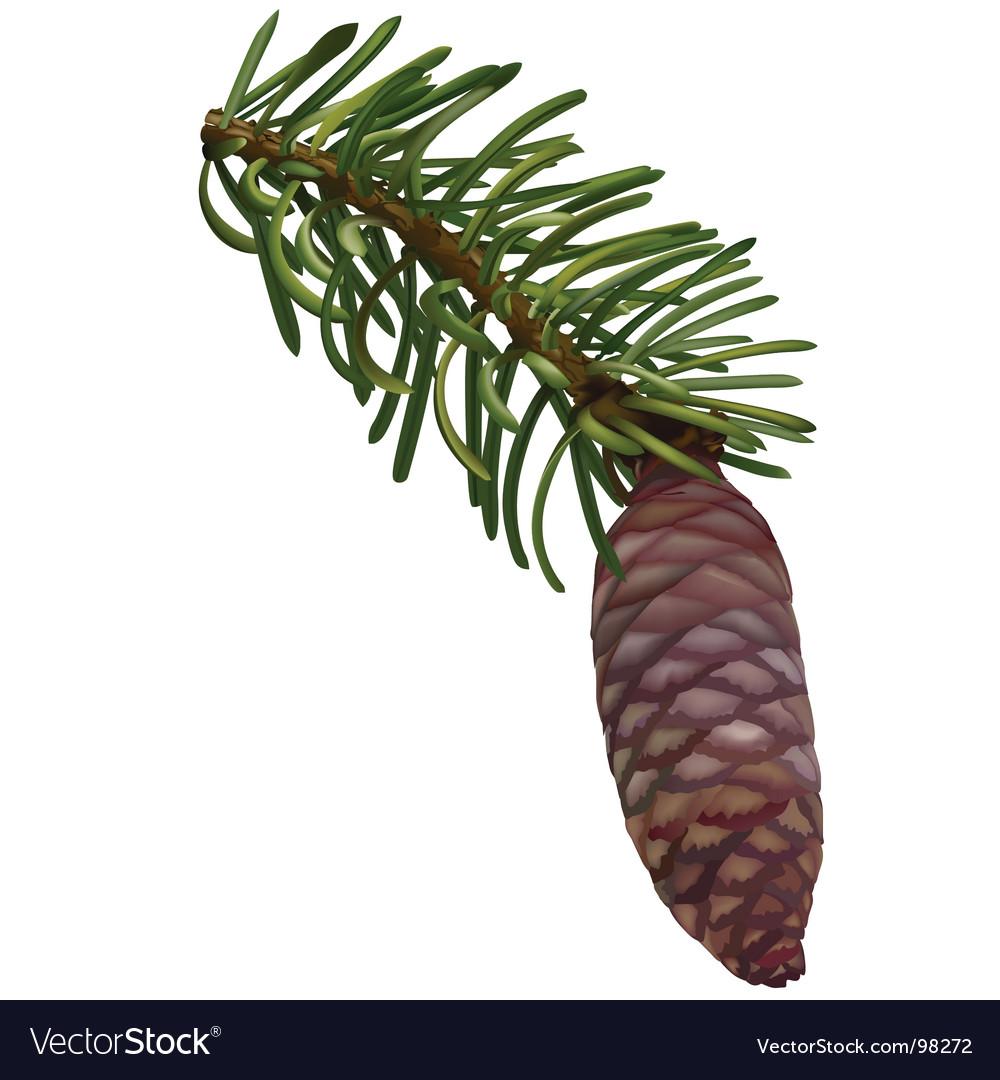 Pine cone vector | Price: 1 Credit (USD $1)