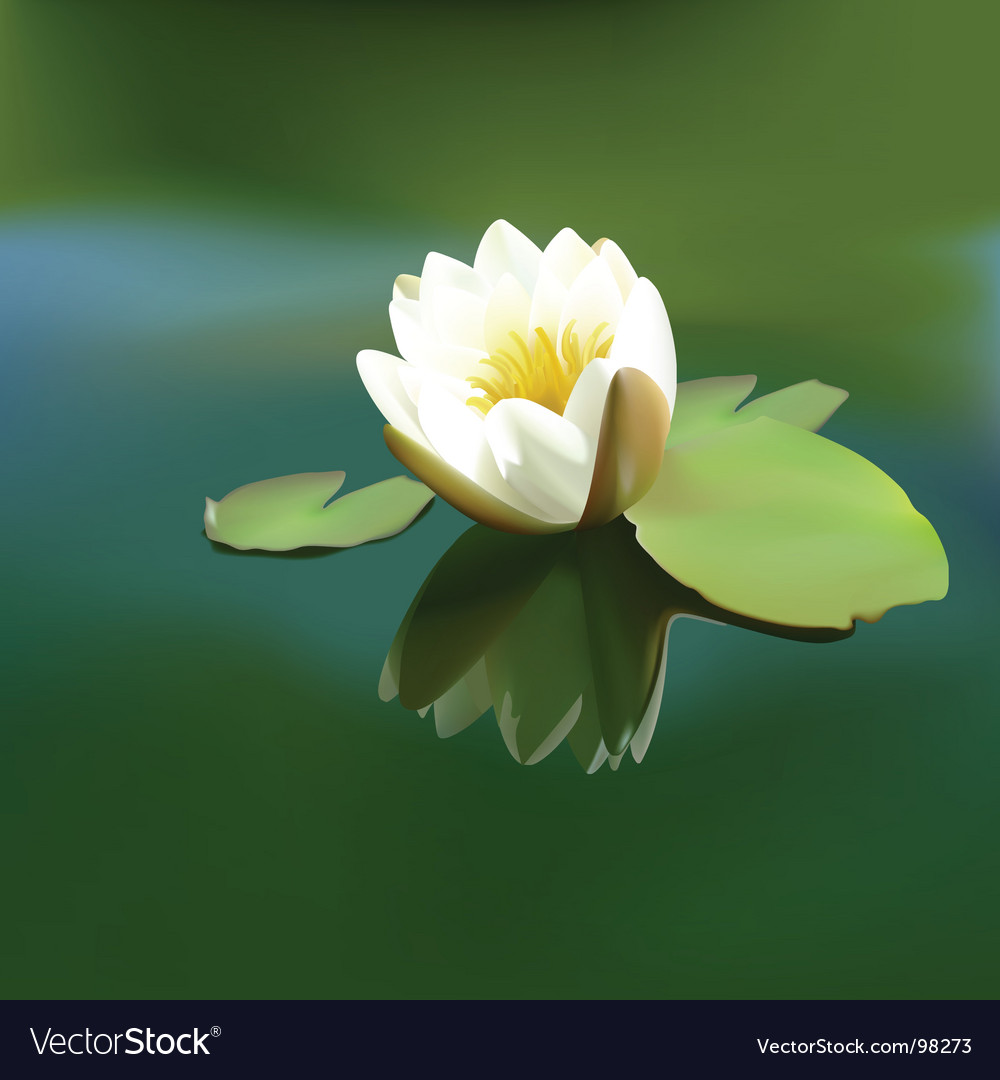 White water lily vector | Price: 1 Credit (USD $1)