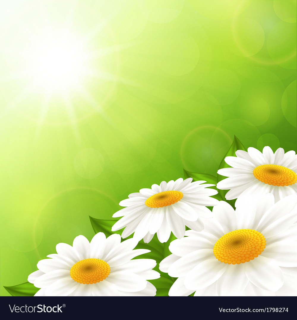 Camomiles on a green background vector | Price: 1 Credit (USD $1)