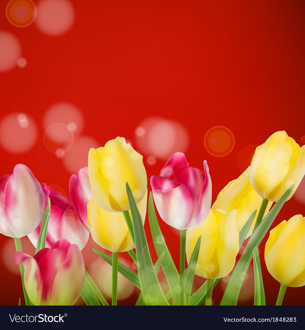 Beautiful bouquet tulips on red eps 10 vector | Price: 1 Credit (USD $1)
