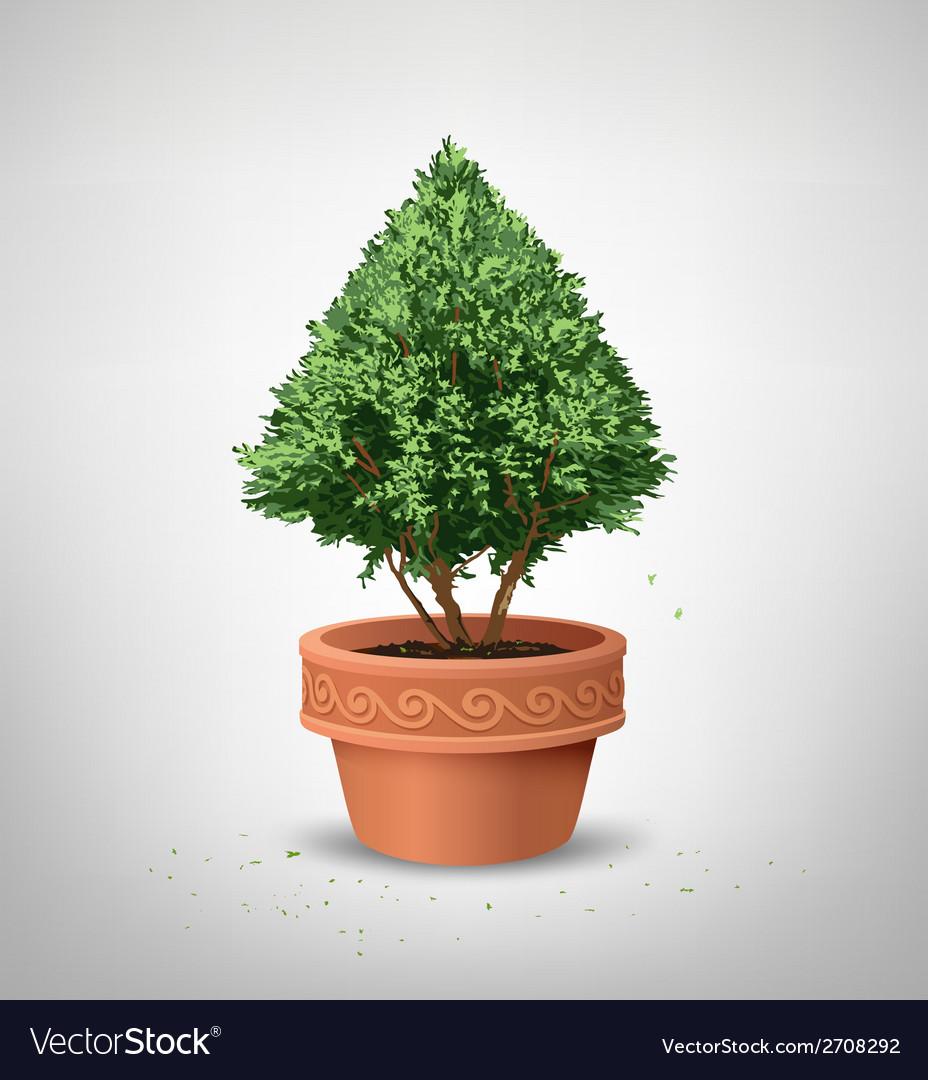 Pots pine tree vector | Price: 1 Credit (USD $1)