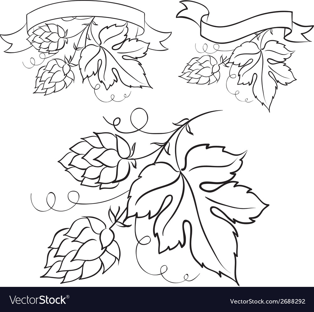 Ripe hops and leaves vector | Price: 1 Credit (USD $1)