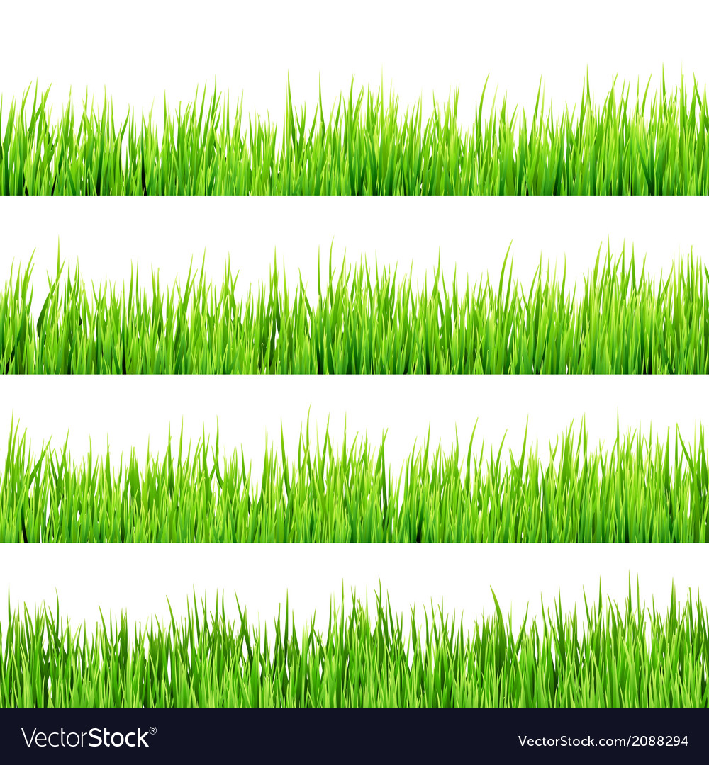 Green grass isolated on white eps 10 vector | Price: 1 Credit (USD $1)
