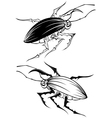 Two stylized beetle vector