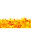Autumn banner template with maple leaf vector
