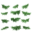 Christmas tree green branches set vector