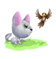 Cat2 vector