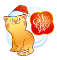 Kitten wearing christmas cap vector