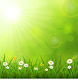 Summer background with grass vector