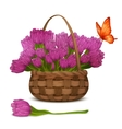 Tulip flowers in basket vector