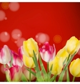 Beautiful bouquet tulips on red eps 10 vector