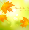 Autumn background with leafs vector