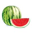 Tasty fresh watermelon vector