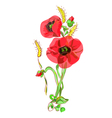 Bouquet with poppies and ears vector