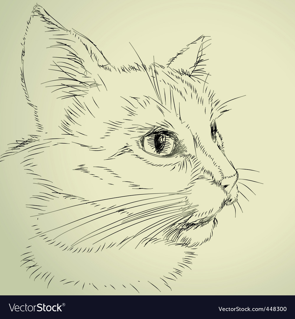 Drawing cat vector | Price: 1 Credit (USD $1)