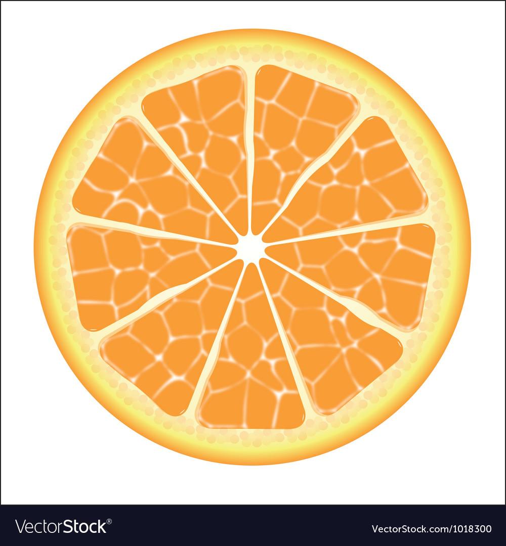 Orange slice vector | Price: 1 Credit (USD $1)