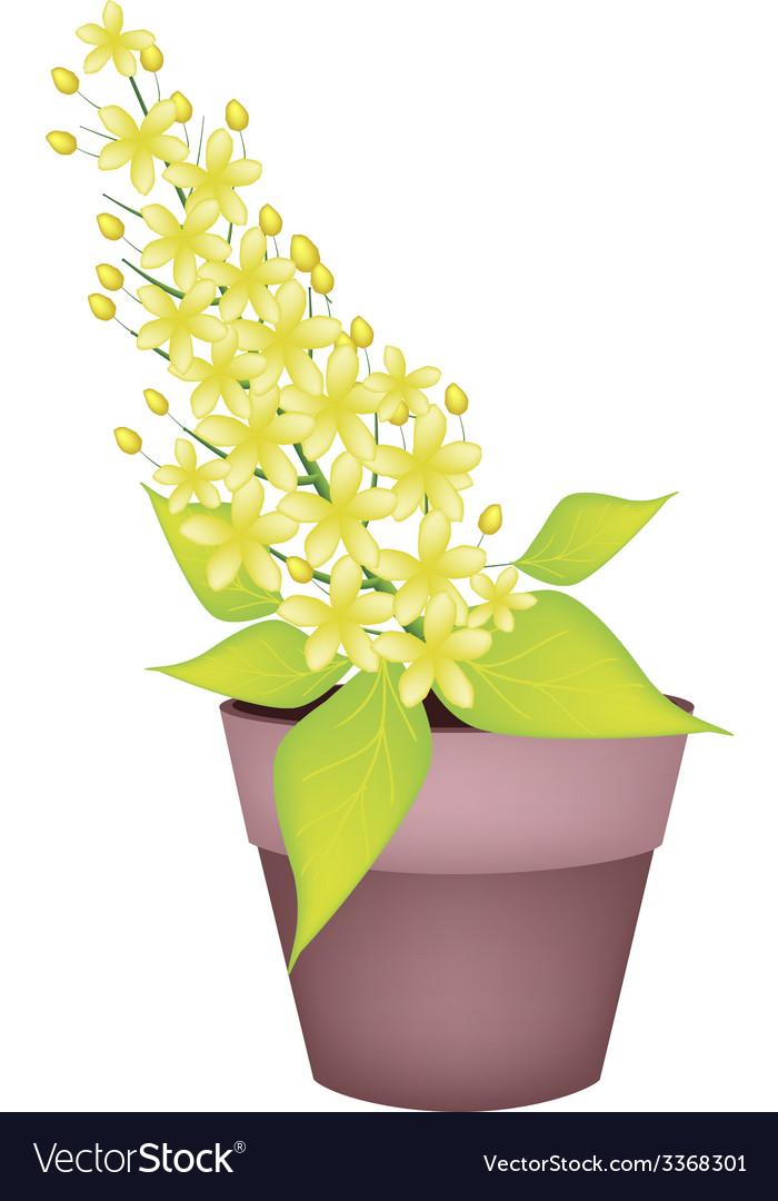 Cassia fistula flower in a ceramic pot vector | Price: 1 Credit (USD $1)