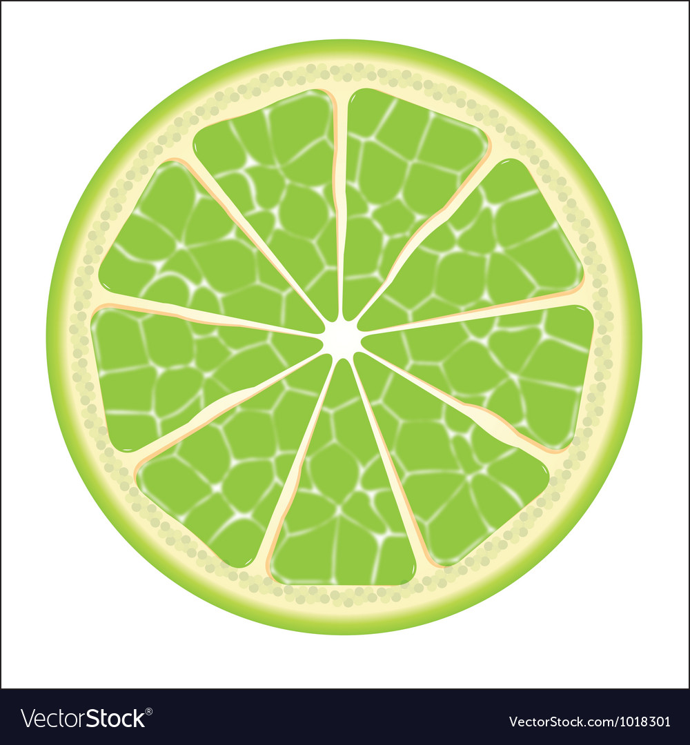Lime slice vector | Price: 1 Credit (USD $1)