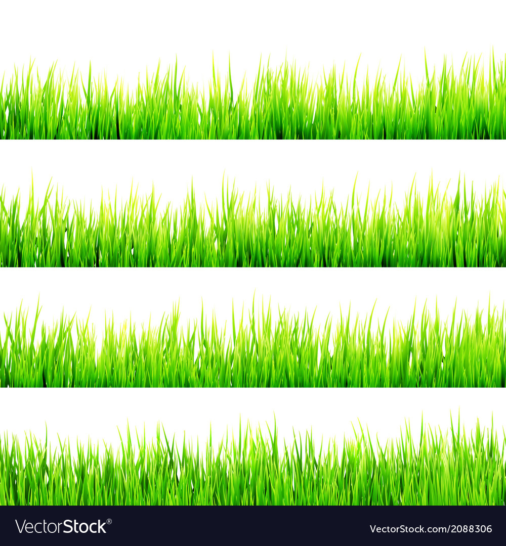 Fresh spring green grass isolated on white eps 10 vector | Price: 1 Credit (USD $1)