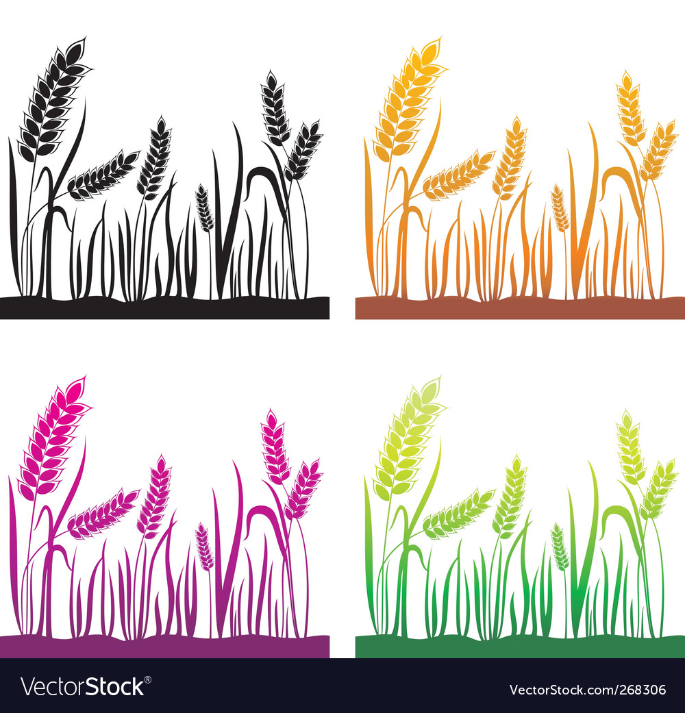 Grain ears vector | Price: 1 Credit (USD $1)