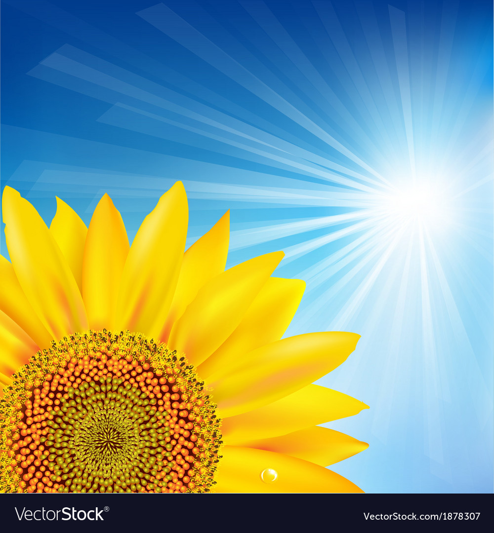Blue sky and sunflower vector | Price: 1 Credit (USD $1)