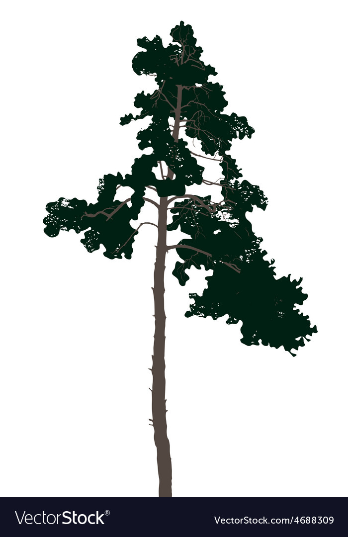 Highly detailed pine tree vector | Price: 1 Credit (USD $1)