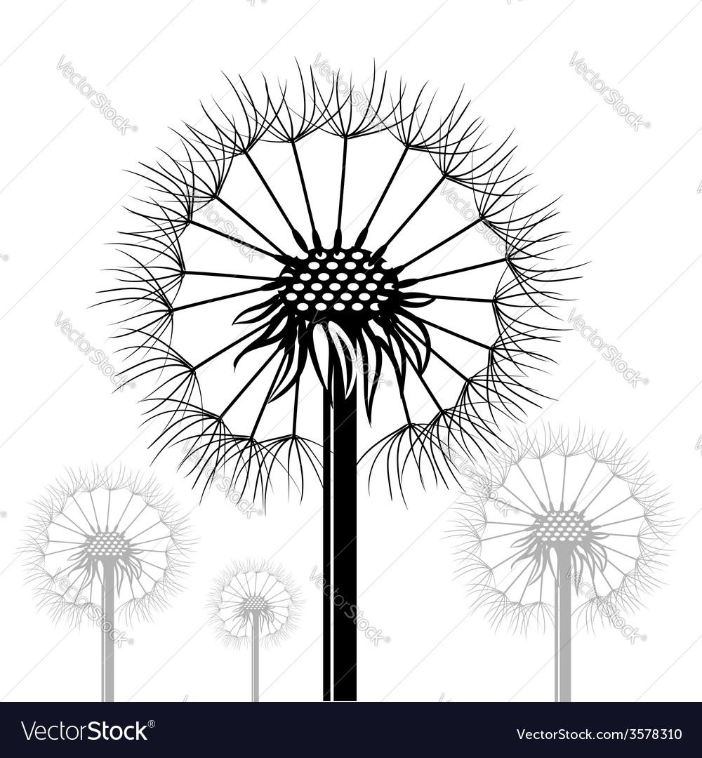 Dandelions vector | Price: 3 Credit (USD $3)