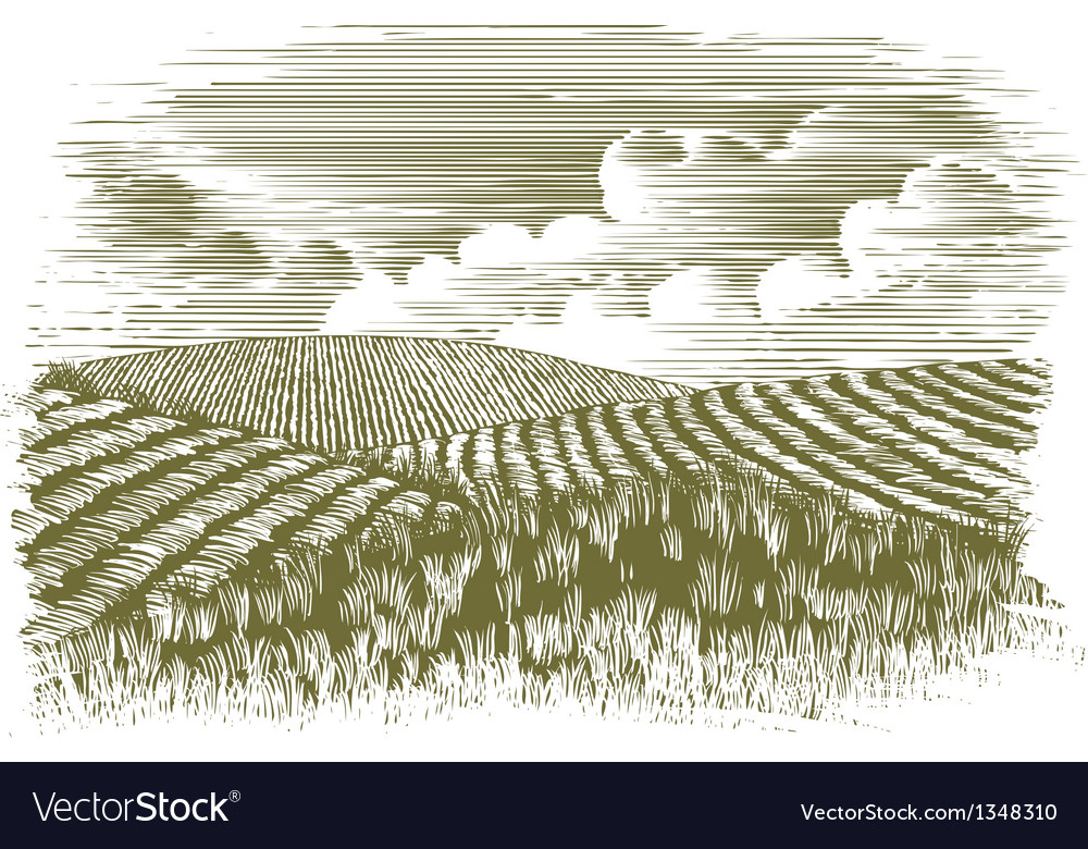 Woodcut farm fields vector | Price: 1 Credit (USD $1)