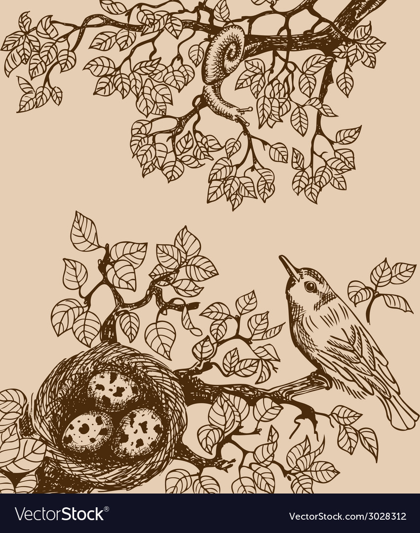 Bird and snail brown vector | Price: 1 Credit (USD $1)
