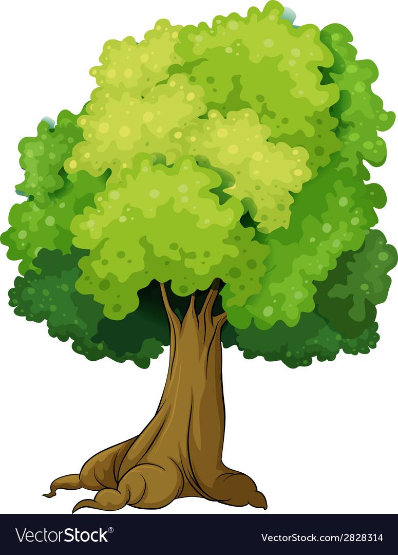 Single tree vector | Price: 1 Credit (USD $1)