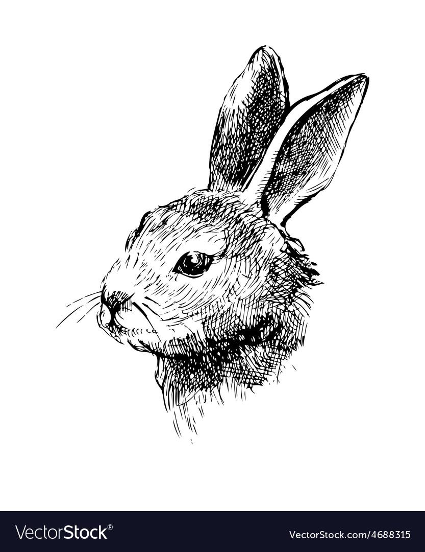 Hand drawn rabbit on white vector | Price: 1 Credit (USD $1)