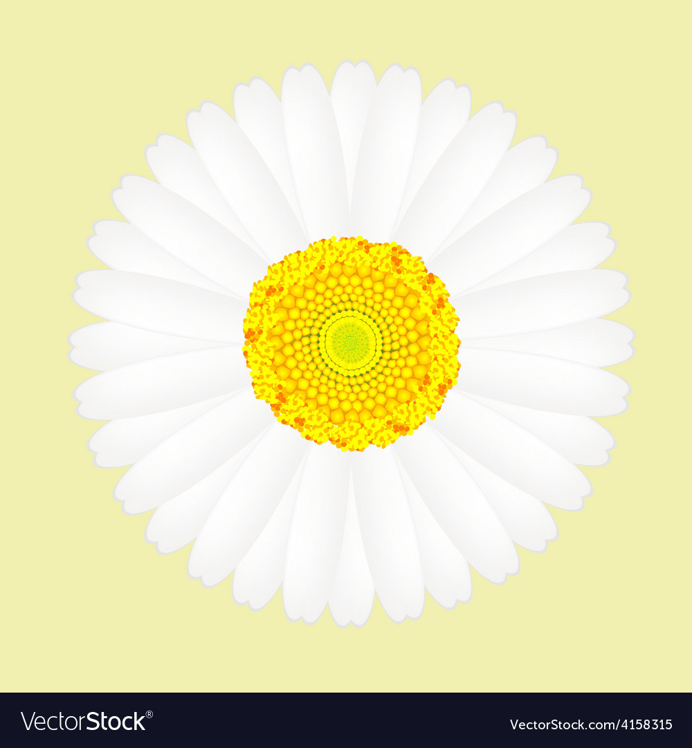 White daisy flower isolated on yellow background vector | Price: 1 Credit (USD $1)