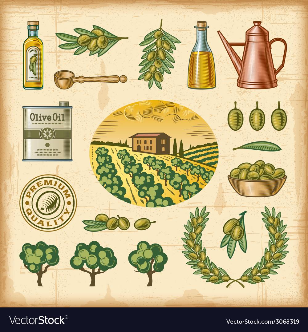 Vintage colorful olive harvest set vector | Price: 1 Credit (USD $1)