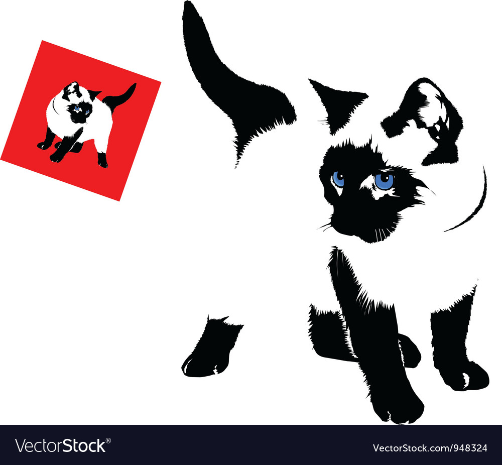 Siamese cat vector | Price: 1 Credit (USD $1)